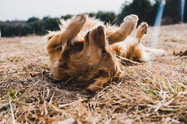 Canales de youtube que te ayudaran con el adiestramiento  de tu perro